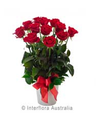 Premium Arrangement of 12 Red Roses in ceramic container (BFG08)
