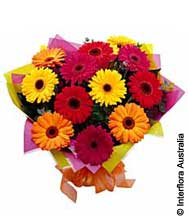 Bright Mixed Gerberas (BFG03)